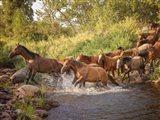 River Horses II Art Print