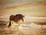 Sunkissed Horses V Art Print