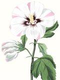 Floral Beauty III Art Print