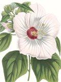 Floral Beauty IV Art Print
