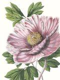 Floral Beauty VI Art Print