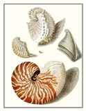Collected Shells I Art Print