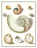 Collected Shells II Art Print