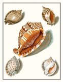 Collected Shells VII Art Print