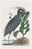 Catesby Heron I Art Print