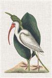 Catesby Heron VI Art Print