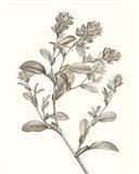 Neutral Botanical Study II Art Print