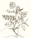 Neutral Botanical Study VI Art Print