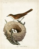 Lesser White-Throat and Nest Art Print