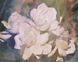 Blush Gardenia Beauty I Art Print