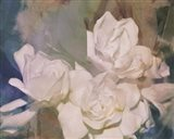 Blush Gardenia Beauty II Art Print