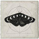Midnight Moth I Art Print
