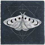 Midnight Moth II Art Print