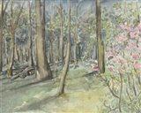 Virginia Woods I Art Print
