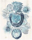 Coastal Melange I Art Print