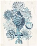 Coastal Melange II Art Print