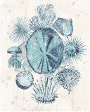 Coastal Melange IV Art Print