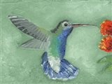 Fresco Hummingbird I Art Print