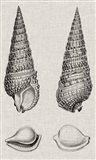 Charcoal & Linen Shells I Art Print