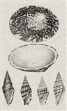 Charcoal & Linen Shells III Art Print