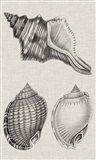 Charcoal & Linen Shells V Art Print