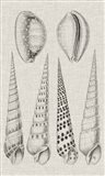 Charcoal & Linen Shells VI Art Print
