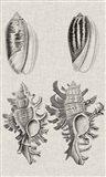 Charcoal & Linen Shells VII Art Print