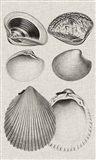 Charcoal & Linen Shells IX Art Print