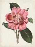 Carnelian Blooms I Art Print