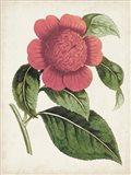 Carnelian Blooms II Art Print
