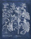 Besler Leaves in Indigo I Art Print