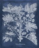 Besler Leaves in Indigo II Art Print