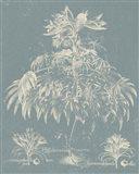 Delicate Besler Botanical I Art Print