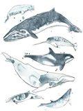 Cetacea I Art Print
