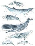 Cetacea II Art Print