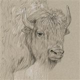 Bison Sketch I Art Print