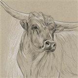 Longhorn Sketch I Art Print
