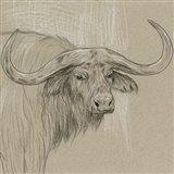 Longhorn Sketch II Art Print