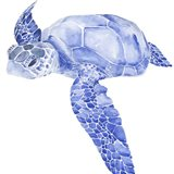 Ultramarine Sea Turtle I Art Print