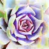Succulente II Art Print
