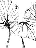 Linear Tropics I Art Print
