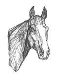 Equine Contour I Art Print