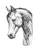 Equine Contour II Art Print