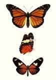 Entomology Series II Art Print