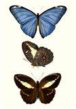 Entomology Series VIII Art Print