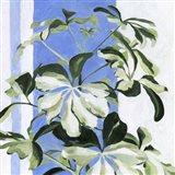 Indoor Plant II Art Print