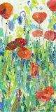 Stately Red Poppies I Art Print