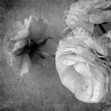 Dark Ranunculus III Art Print