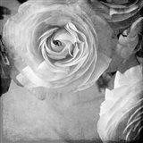 Dark Ranunculus IV Art Print