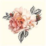 The Light of Day Rose I Art Print